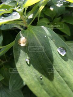 緑の葉のアップの写真・画像素材[905173]