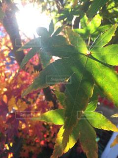 植物のアップの写真・画像素材[905174]