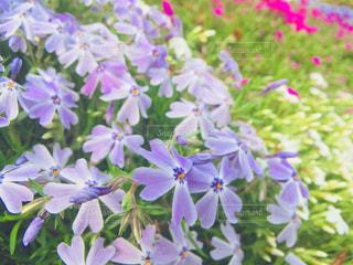 近くの花のアップの写真・画像素材[1106097]