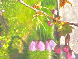 近くの花のアップの写真・画像素材[1109533]