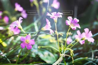 花のクローズアップの写真・画像素材[2117511]