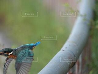 鳥のぼやけたイメージの写真・画像素材[4949868]