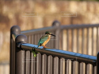 金属製のフェンスの上に止まっている小鳥の写真・画像素材[4949900]