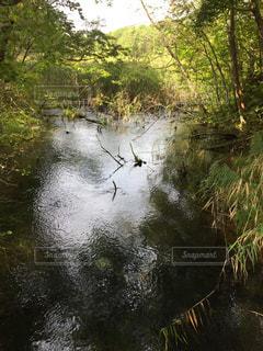 湖の写真・画像素材[224697]