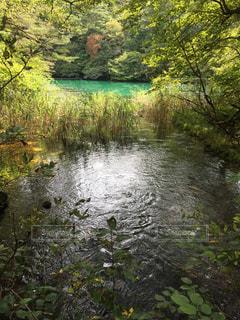 湖 - No.224698