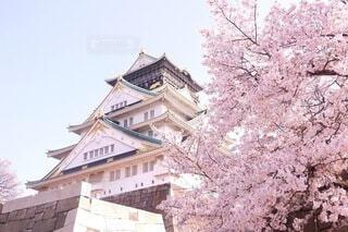 お城と桜の写真・画像素材[4951664]