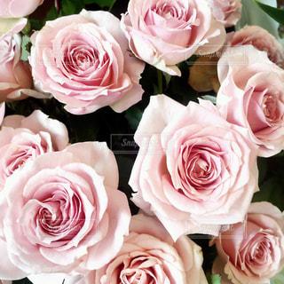 ピンクの花の花束の写真・画像素材[1173697]