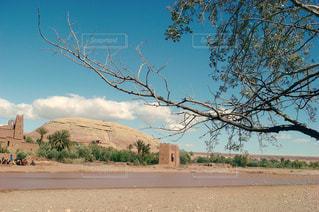 湖の前に木の写真・画像素材[1181492]