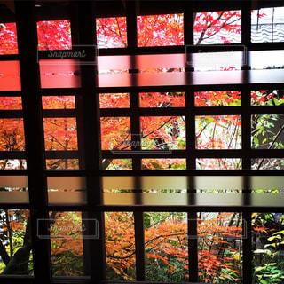 大きなガラス窓の写真・画像素材[1232043]