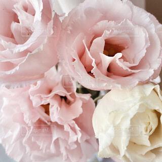 花のクローズアップの写真・画像素材[4640587]