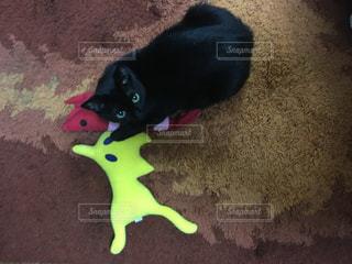 猫の写真・画像素材[225367]