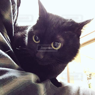 猫の写真・画像素材[225370]