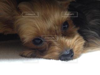 犬の写真・画像素材[224967]