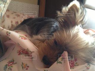 犬の写真・画像素材[224969]
