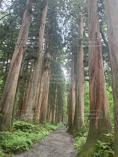 森林浴の写真・画像素材[4958859]