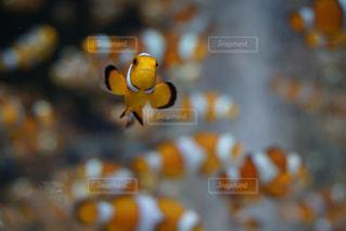 自然の写真・画像素材[225084]