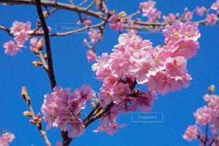 自然の写真・画像素材[225088]
