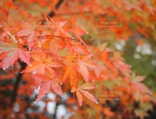 自然の写真・画像素材[225423]