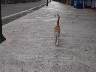 猫の写真・画像素材[225826]