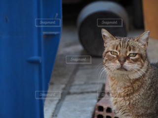 猫 - No.225940