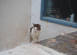 猫の写真・画像素材[225945]