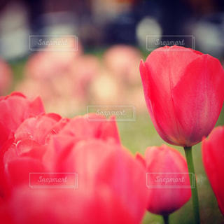 花の写真・画像素材[346775]