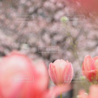 花の写真・画像素材[349078]