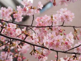 花 - No.361522