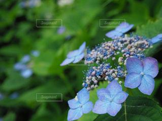 花の写真・画像素材[539925]