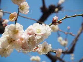 近くの花のアップの写真・画像素材[1078116]