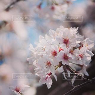 花の写真・画像素材[1093445]