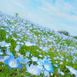 近くの花のアップの写真・画像素材[1161662]