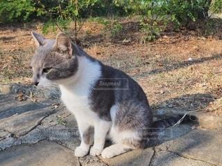 猫の写真・画像素材[2647139]