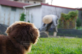 No.225996 犬