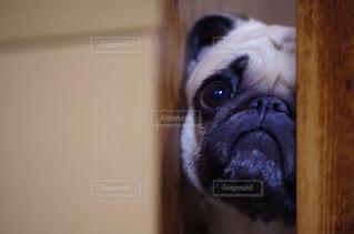 犬の写真・画像素材[228091]