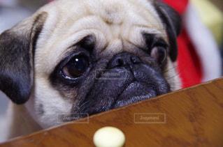 犬の写真・画像素材[263180]