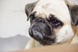 犬 - No.272446