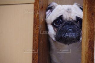 犬の写真・画像素材[306946]