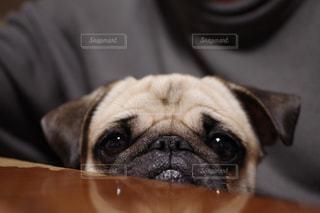 犬の写真・画像素材[320727]