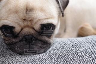 犬 - No.393255