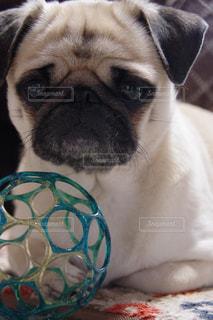 犬 - No.438095