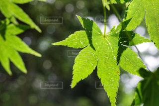 自然の写真・画像素材[547163]