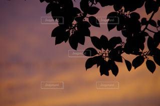 秋の夕焼け空にシルエットの写真・画像素材[740326]