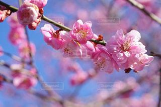 近くの花のアップの写真・画像素材[1070514]