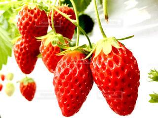 近くに果物のの写真・画像素材[1127778]