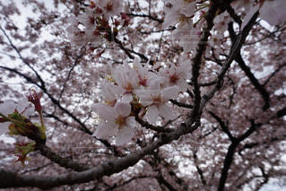 自然の写真・画像素材[225720]