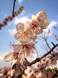 春 - No.225856