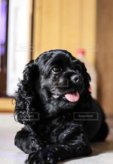 犬の写真・画像素材[226072]