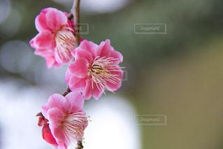 近くの花のアップの写真・画像素材[1043362]