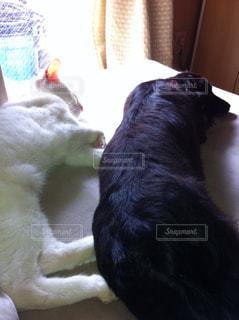 犬の写真・画像素材[228571]
